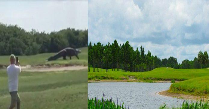 Aligator Raksasa Terekam Berjalan Cuek di Lapangan Golf