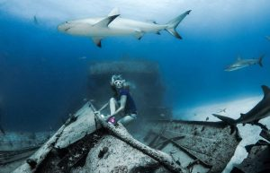 Aksi Berani Wanita Bahamas Menyelam di Tengah Hiu