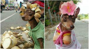 Unik, Gaya Gaul dan Menggemaskan Anjing 'Penjual' Buah