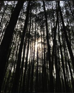 Raline Shah Kepincut Hutan Pinus Imogiri Yogyakarta