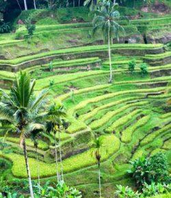 Ubud Bali Dinobatkan sebagai Kota Terbaik Kedua di Asia