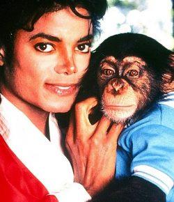 """Berita Bintang – Kisah Bubbles, """"Anak"""" Michael Jackson yang Kini Hidup di Penangkaran"""