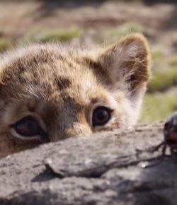 Berita Bintang – 4 Rekomendasi Film Pekan Ini, 'The Lion King'